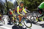 Tour of the Alps 2017 - 41th Edition - 4th stage Bolzano - Cles 165,3 Km - 20/04/2017 - Filippo Pozzato (ITA - Wilier Selle Italia) - photo Luca Bettini/BettiniPhoto©2017