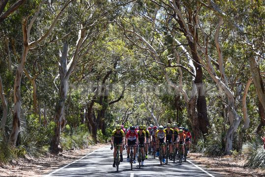 Tour Down Under 2018 - 3rd Stage Glenelg - Victor Harbour 120,5 km - 18/01/2018 - Scenery - Photo Dario Belingheri/BettiniPhoto©2017