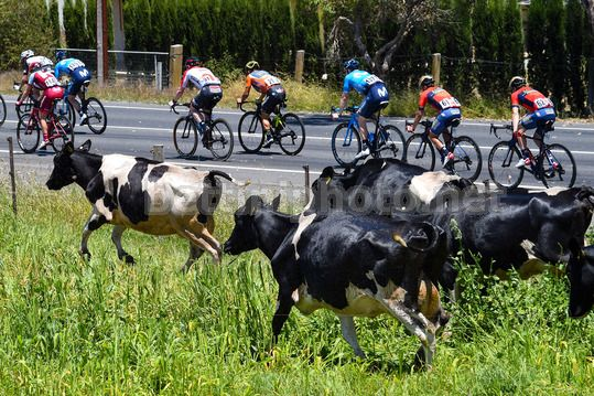 Tour Down Under 2018 - 4th Stage Norwood - Uraidla 128,2 km - 19/01/2018 - Scenery - Photo Dario Belingheri/BettiniPhoto©2017