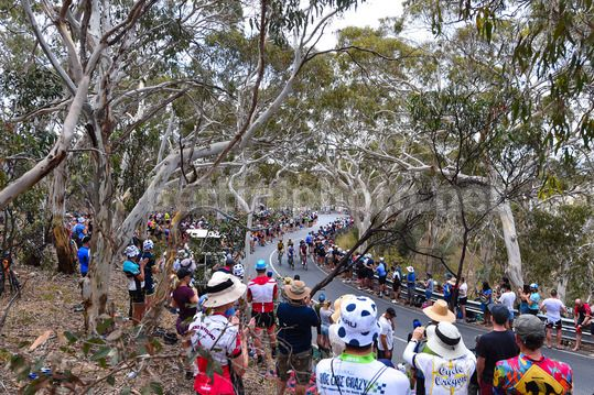 Tour Down Under 2018 - 5th stage McLaren Vale - Willing Hill 151,8 km - 20/01/2018 - Scenery - Photo Dario Belingheri/BettiniPhoto©2017