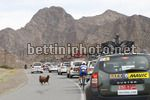 Tour of Oman 2018 - 9th Edition - 1st stage Nizwa - Sultan Qaboos University 162,5 km - 13/02/2018 - Goat on the race street - photo Luca Bettini/BettiniPhoto©2018